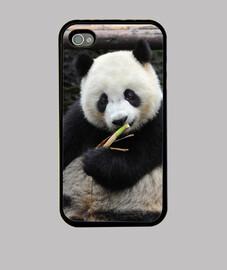 panda manger bambou