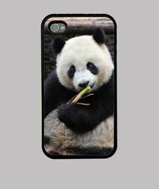 panda mangiare bambù
