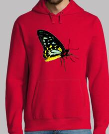 papillon ornithoptera euphorion