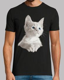 Pequeño gatito blanco ojos azules