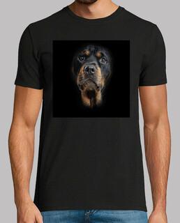 Perro Rott