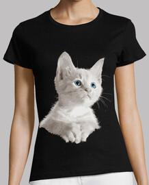 petit chaton blanc yeux bleus