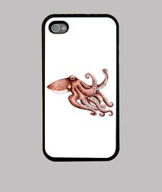 poulpe (octopus vulgaris)