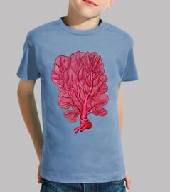red coral venus (gorgonia flabellum)