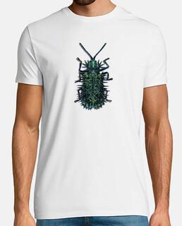 Rice hispa-Escarabajo del arroz