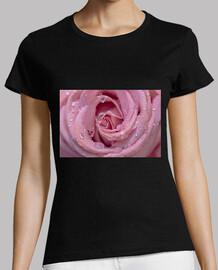 Rocío en la rosa