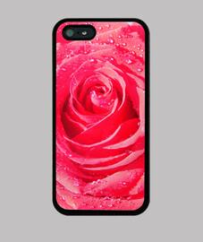 Rosa fresca funda