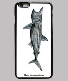 shark pilgrim shark (cetorhinus maximus)