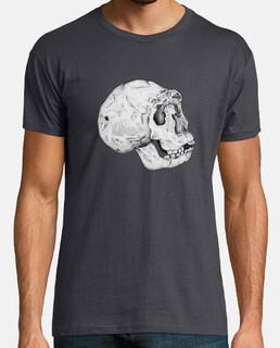 skull homo ergaster