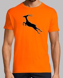Springbok gazelle