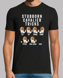 Stubborn Perro Cavalier Tricks