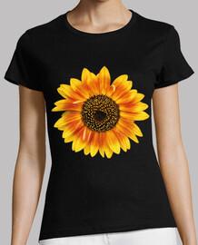 sunflower flower / sunflowers