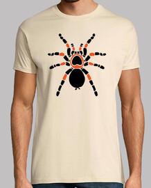 Tarantula Araña Spider