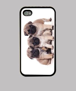 three pugs puppies