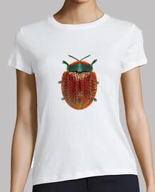 Tortoise beetle-Escarabajo tortuga