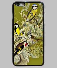 uccelli b
