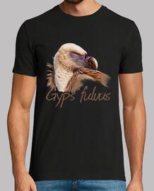 vautour fauve - portrait