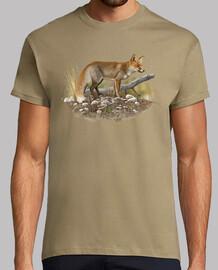 volpe comune