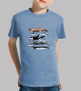 wale, pottwale, wale und delfine camiseta