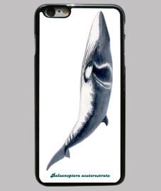 whale whale