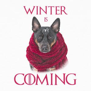 Camisetas Winter is coming
