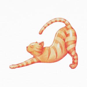 Tee-shirts Yoga Cat