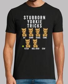 yorkshire terrier têtu rick s