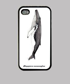 Yubarta ballena jorobada iphone 4