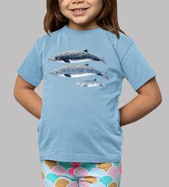 Zifio de Blainville camiseta niño niña